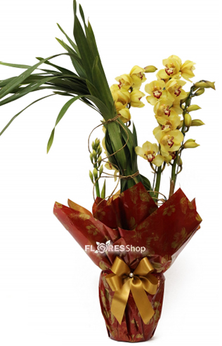 4493 Top Cymbidium